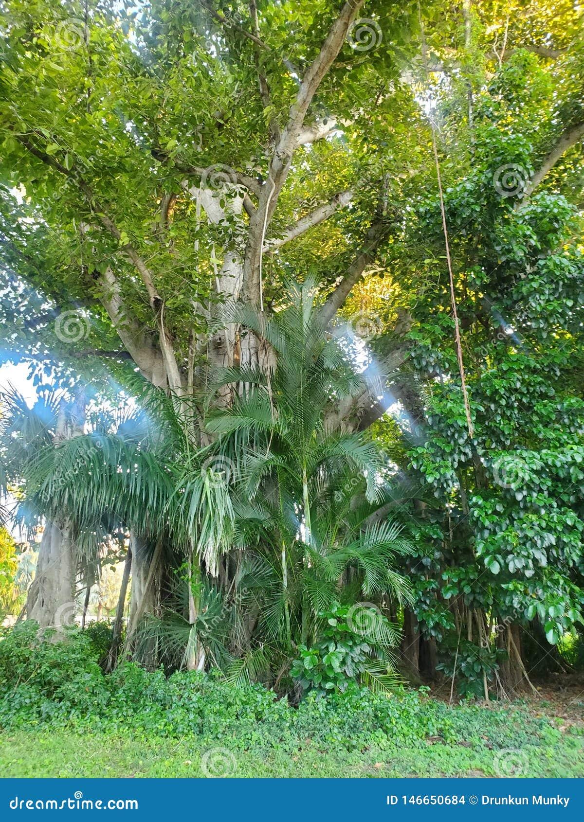 Così albero maestoso La natura ? vero bella
