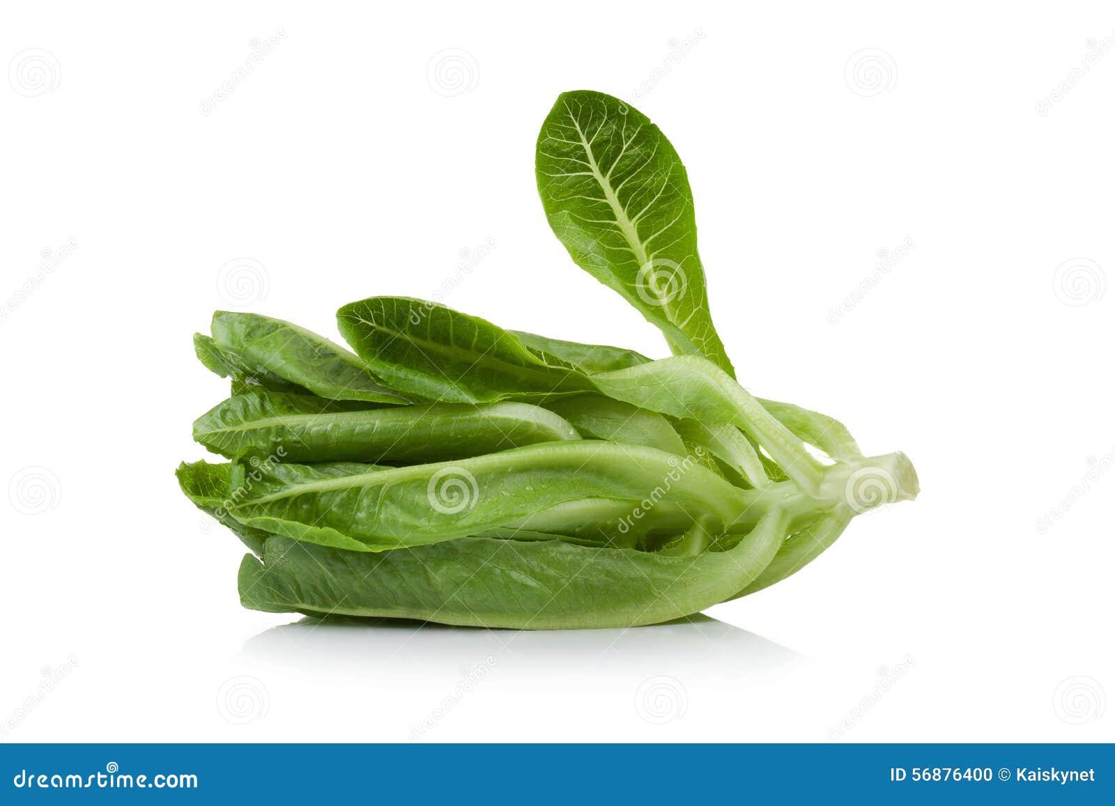 Cos Lettuce ha isolato su fondo bianco