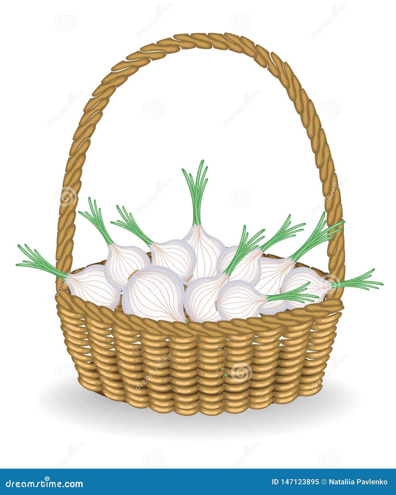 Cosecha abundante en cebollas frescas hermosas de una cesta de mimbre Las verduras son esenciales para cocinar y sanas Ilustraci?