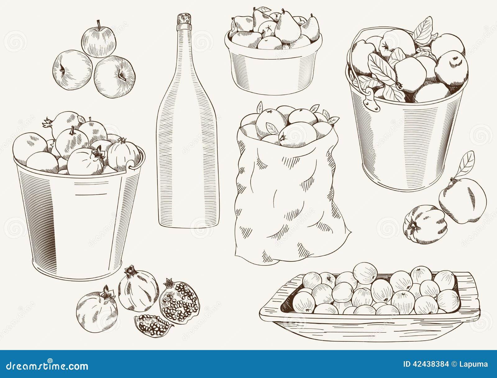 Cosecha de la fruta