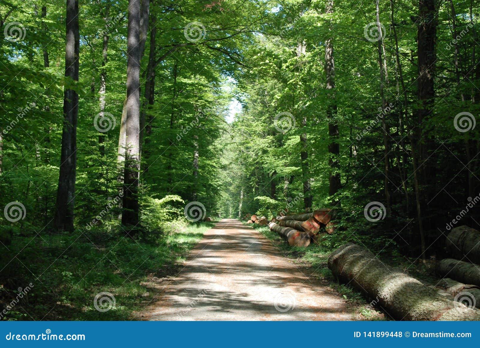 Cosecha de madera en el bosque negro