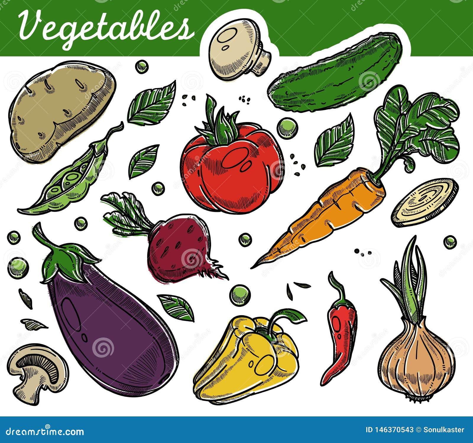 Cosecha vegetariana de la nutrición de la comida orgánica de la granja de las verduras