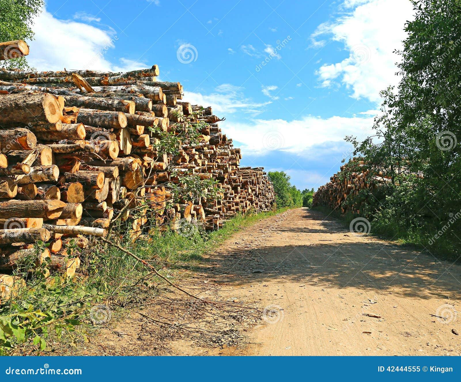 Cosechando la madera abre una sesión un bosque