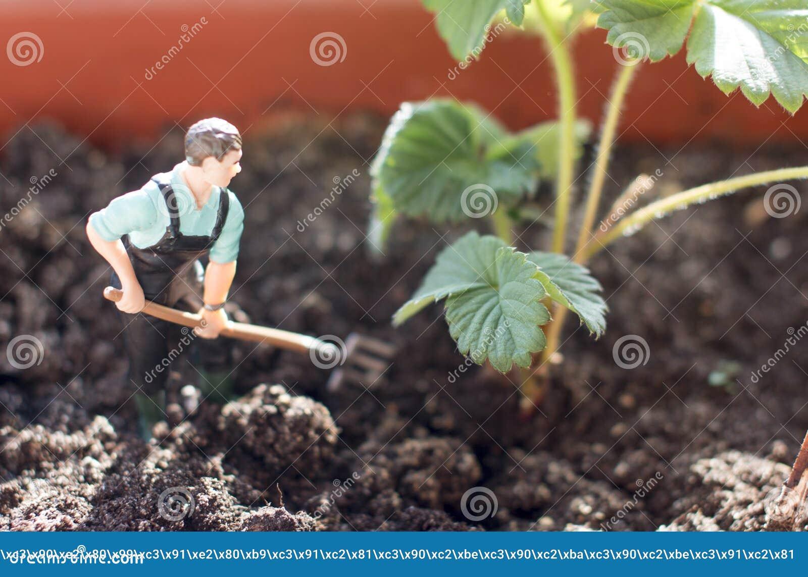 Cosechas jovenes del granjero