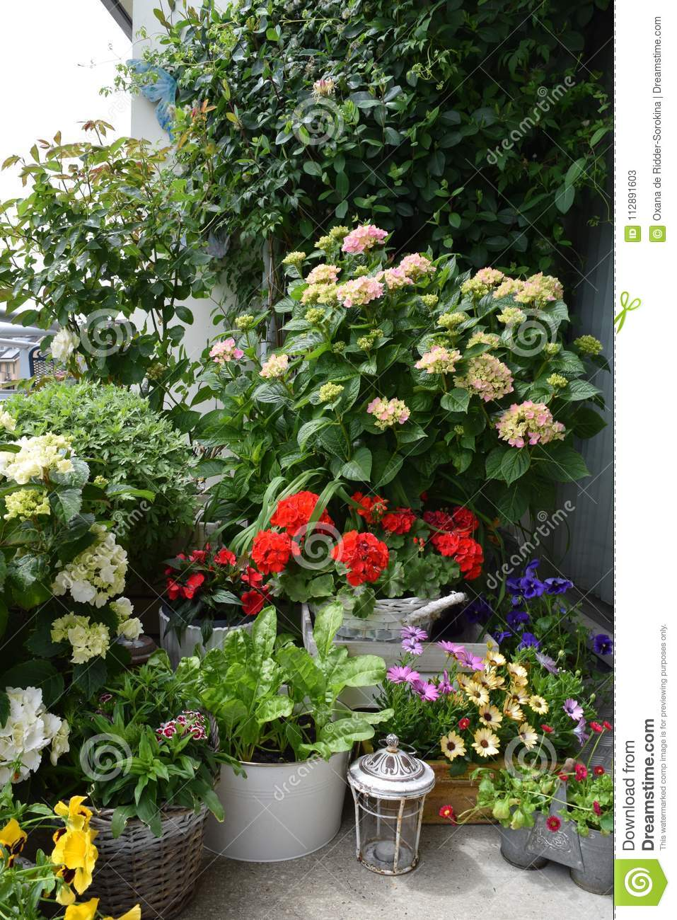 Cosiness with flowers and plants on the balcony