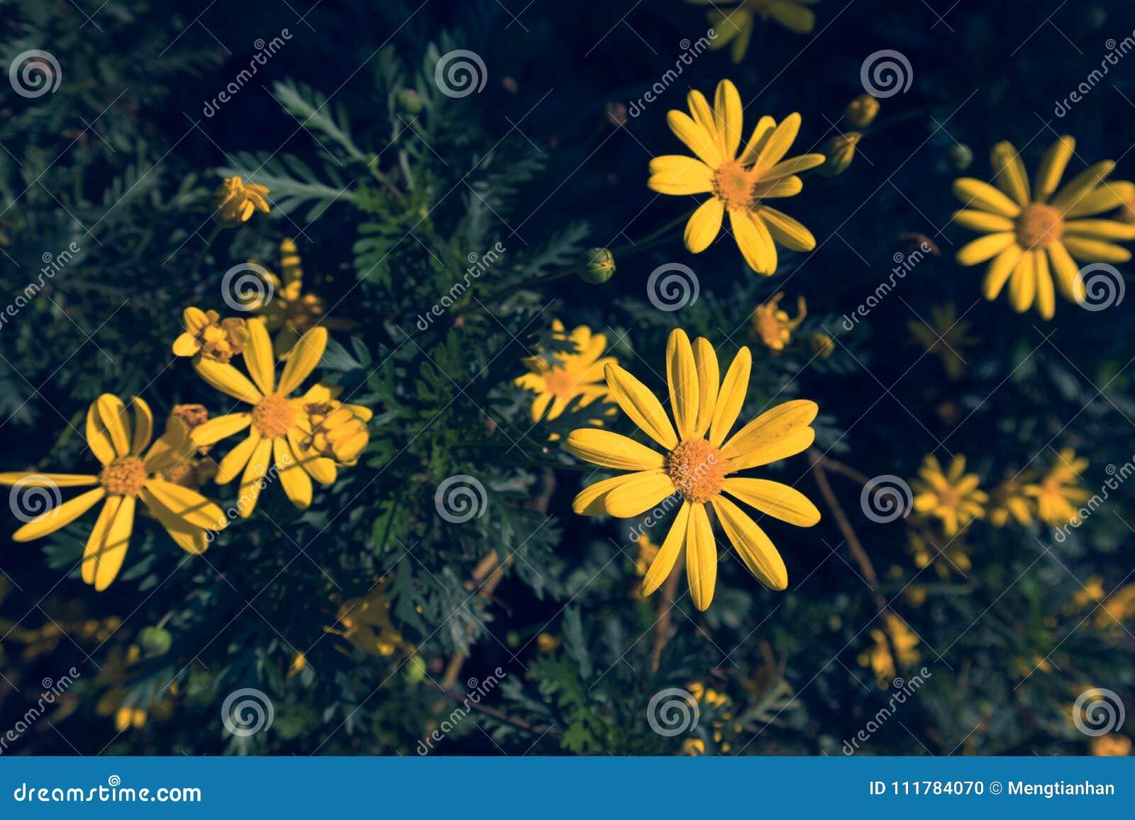 On the roadside wild calliopsis stock photo image of blue flower royalty free stock photo izmirmasajfo Gallery