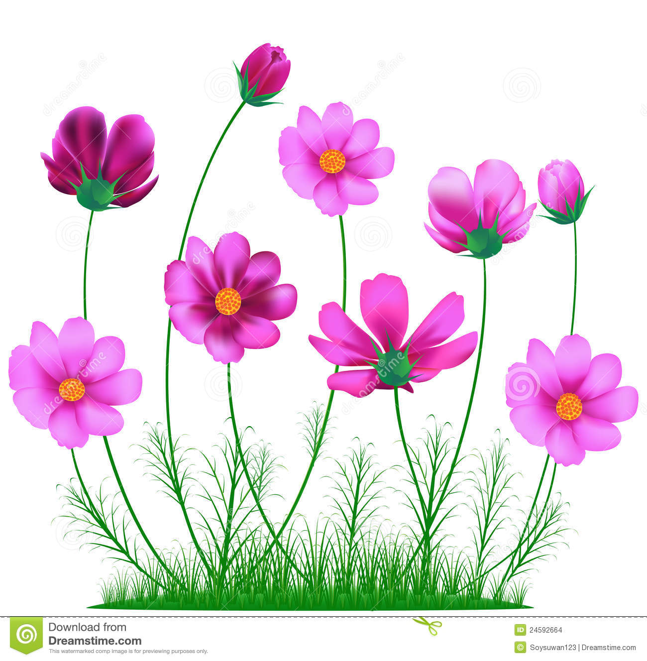 Cosmos Flower Stock Vector. Illustration Of Artwork