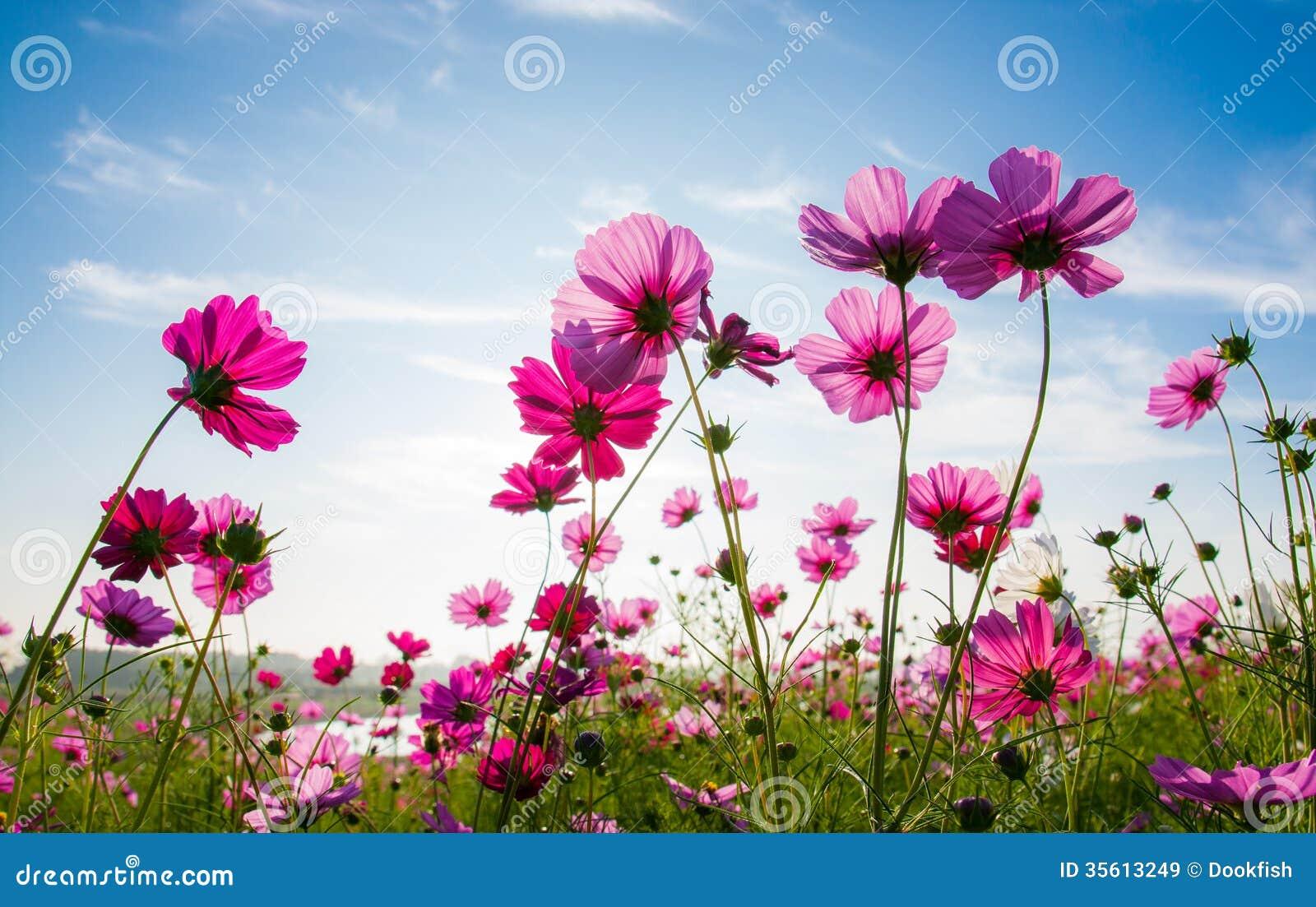 Free Clipart Autumn Flowers