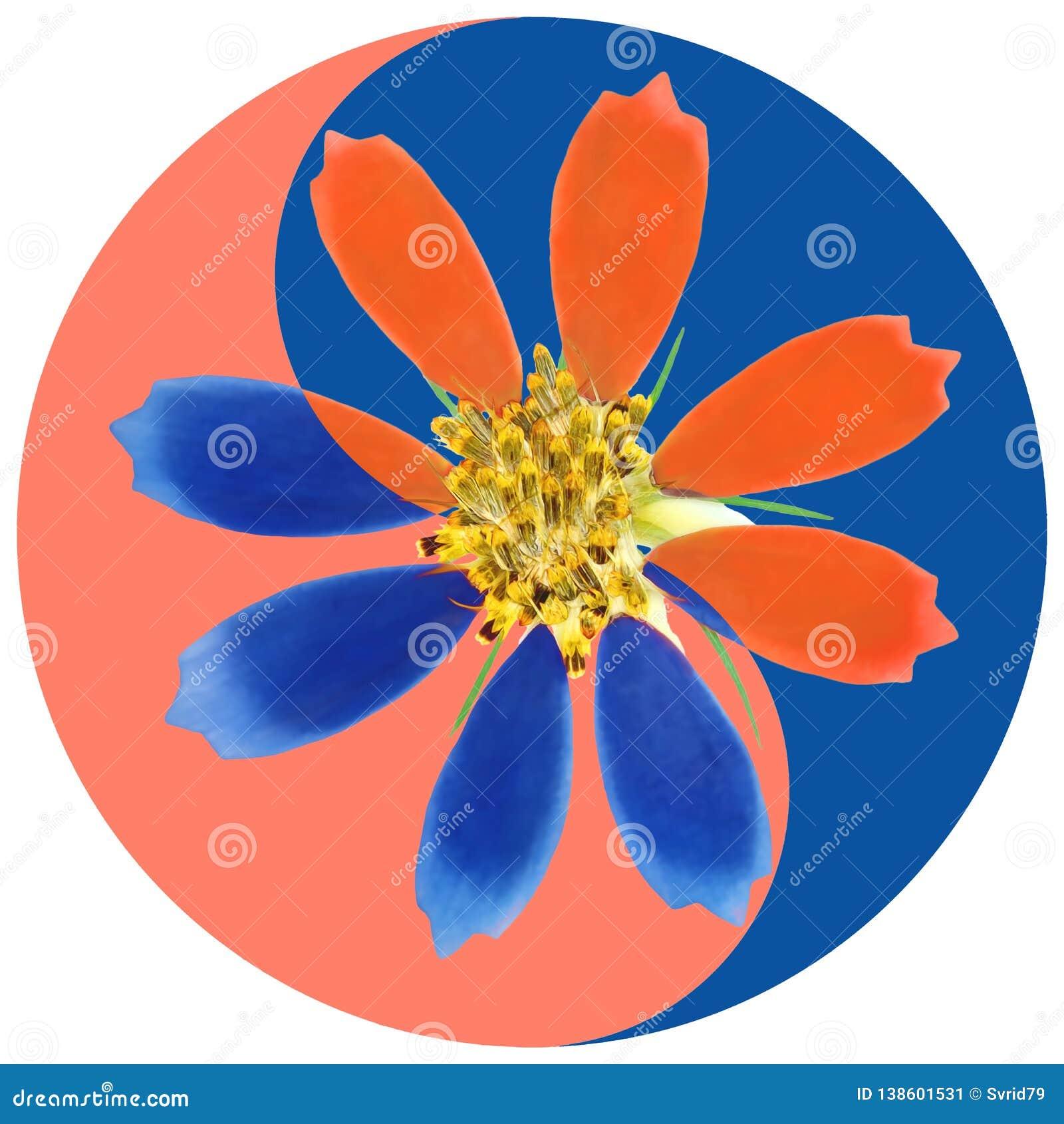 Cosmos Símbolo floral de Yin Yang
