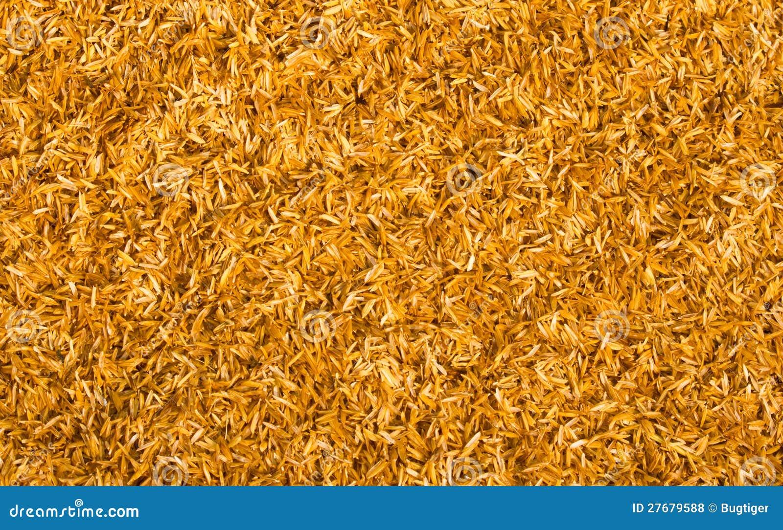 cosse de riz photo stock image du centrale paddy lames 27679588. Black Bedroom Furniture Sets. Home Design Ideas