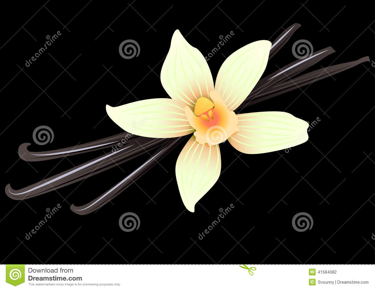 cosses et fleur de vanille illustration stock - image: 41584082