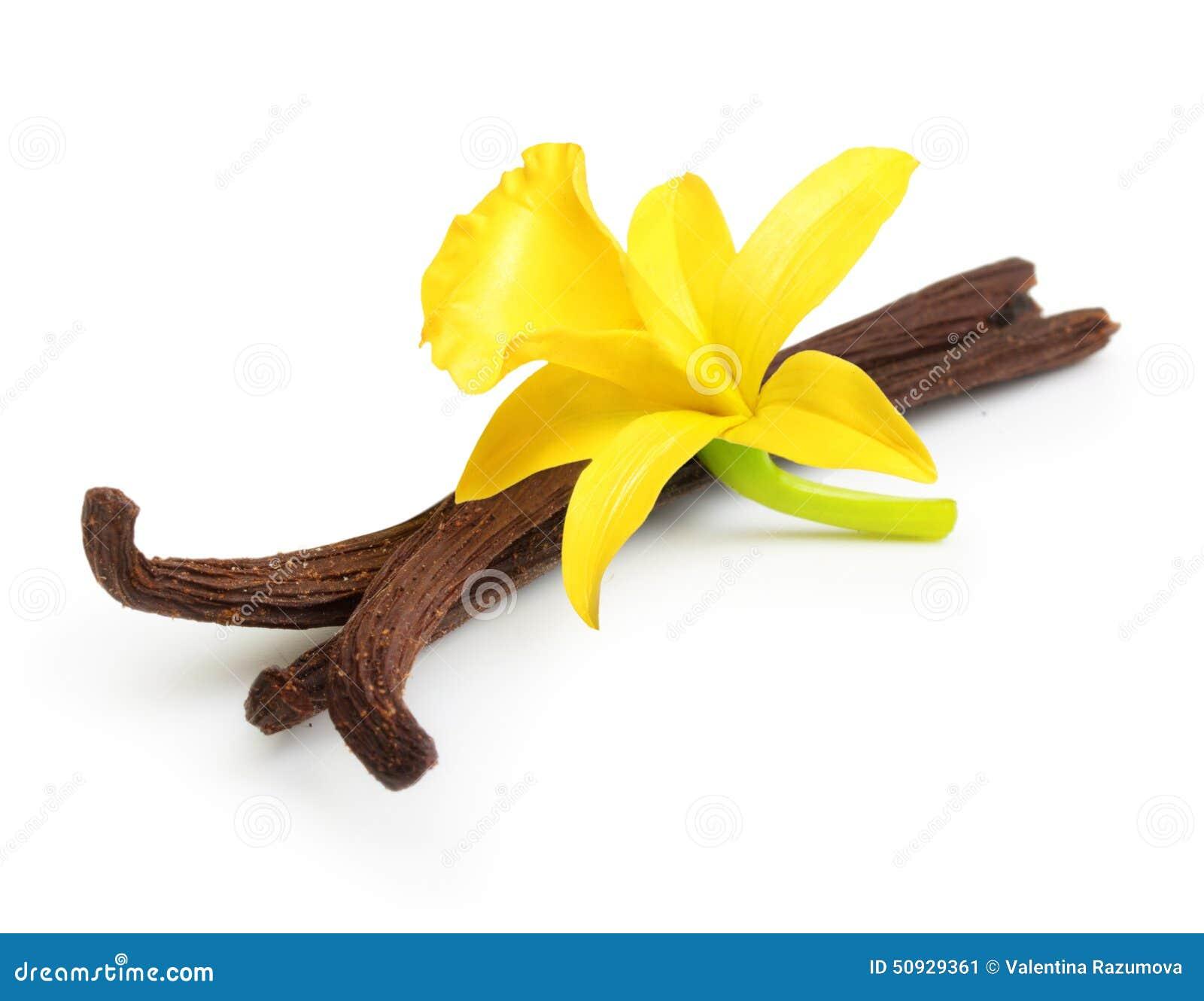 Cosses et fleur de vanille
