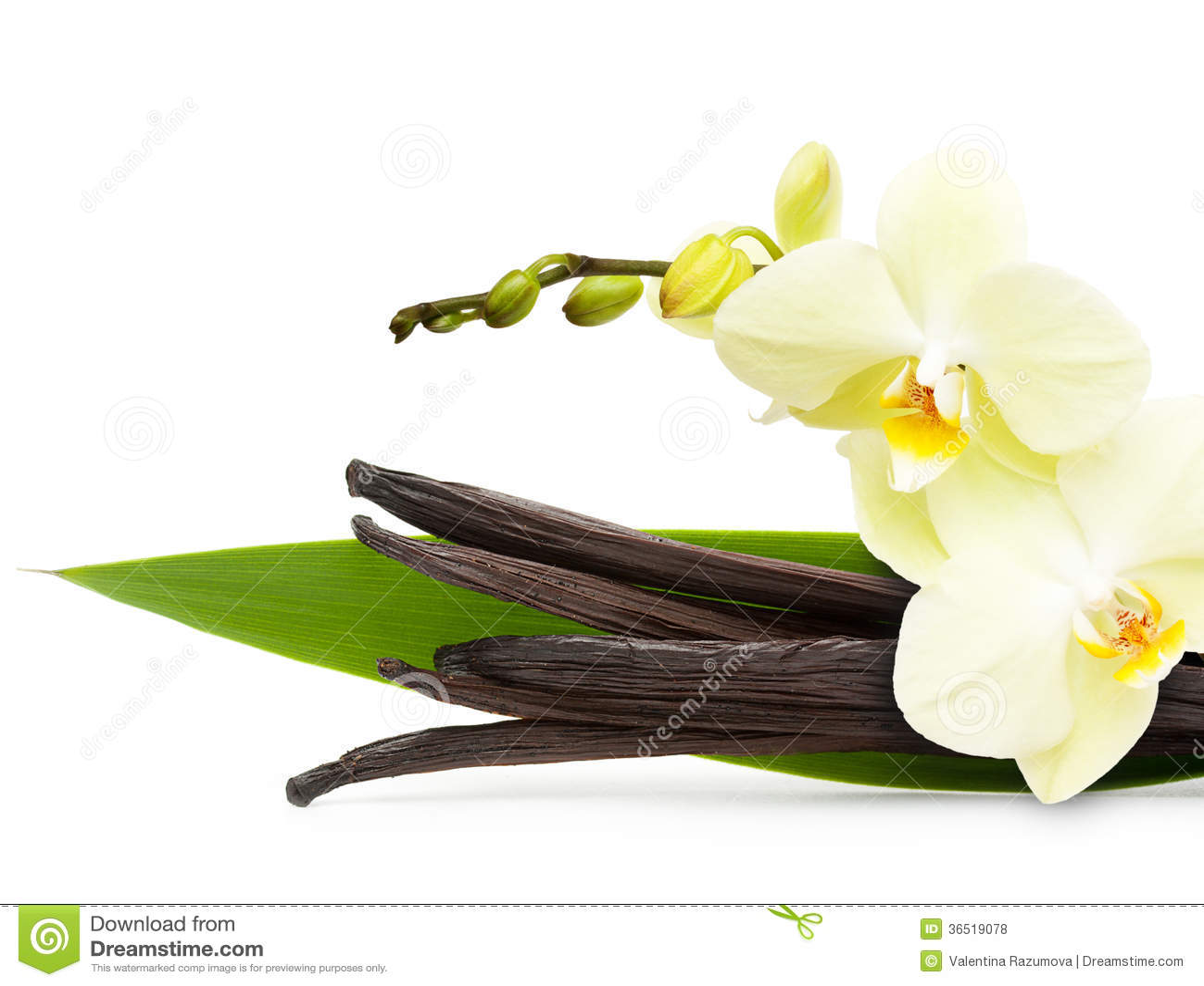 Cosses et fleur de vanille d isolement