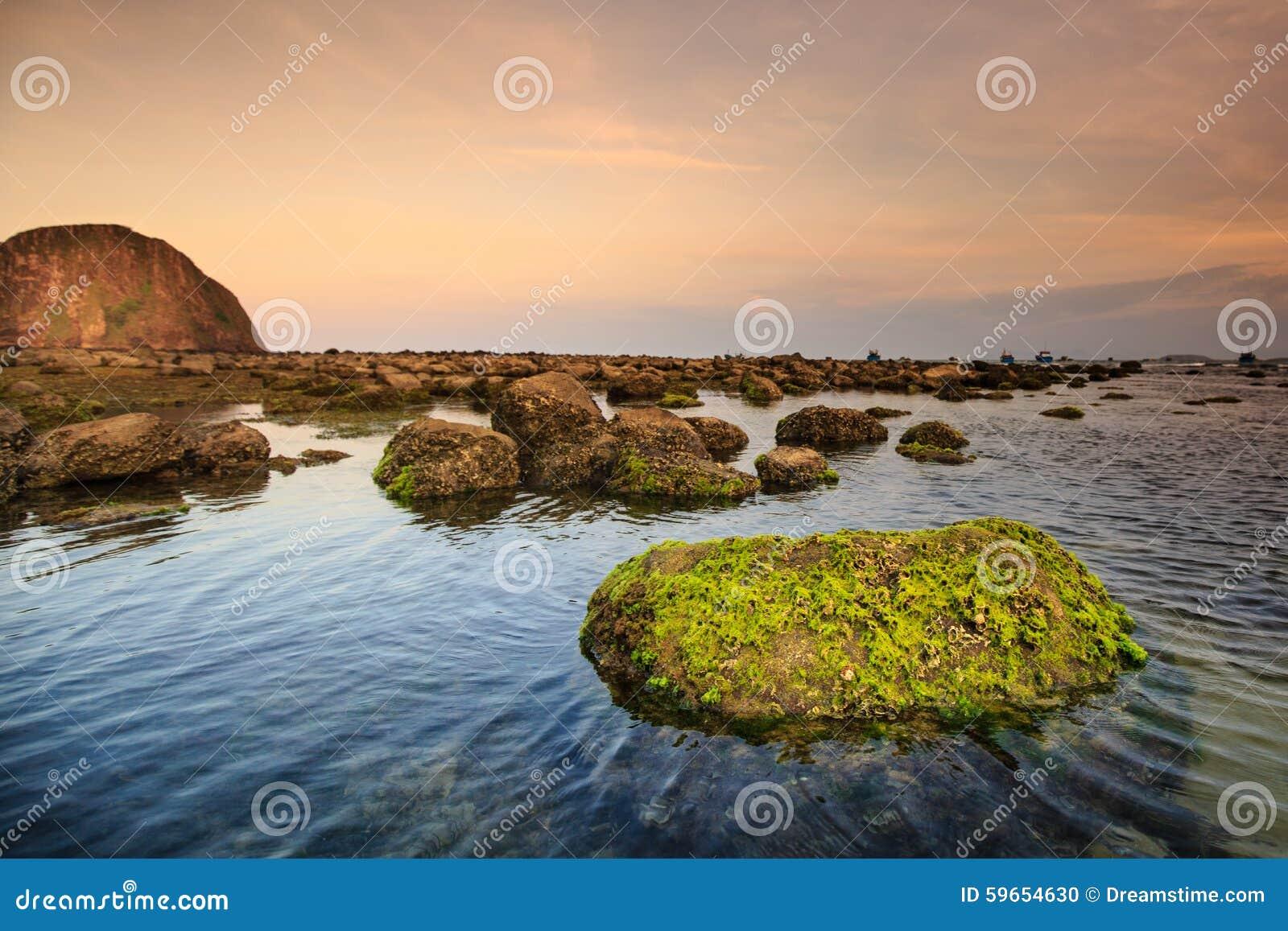 Costa con las rocas y el musgo