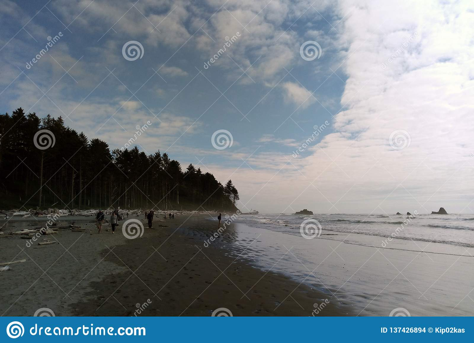Costa costa de la playa en el parque nacional olímpico, la península olímpica cerca de Seattle