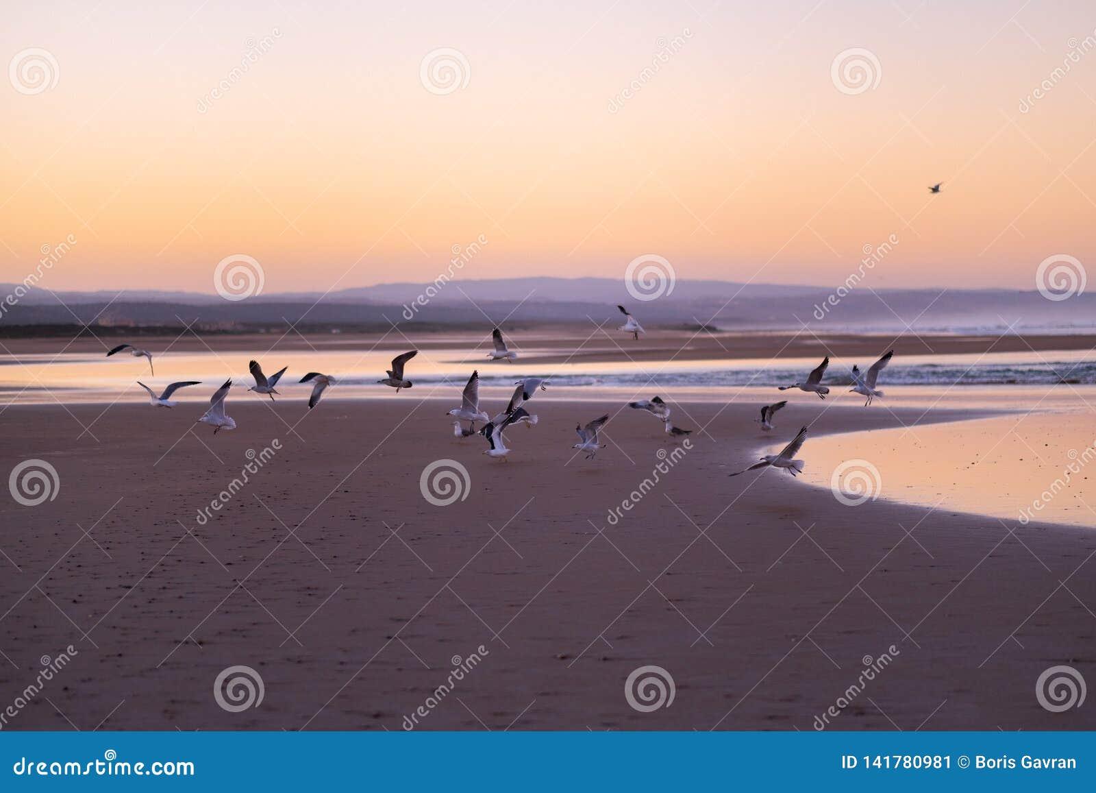 Costa de Sidi Kaouki, Marrocos, África Tempo do por do sol de Marrocos cidade da ressaca maravilhosamente