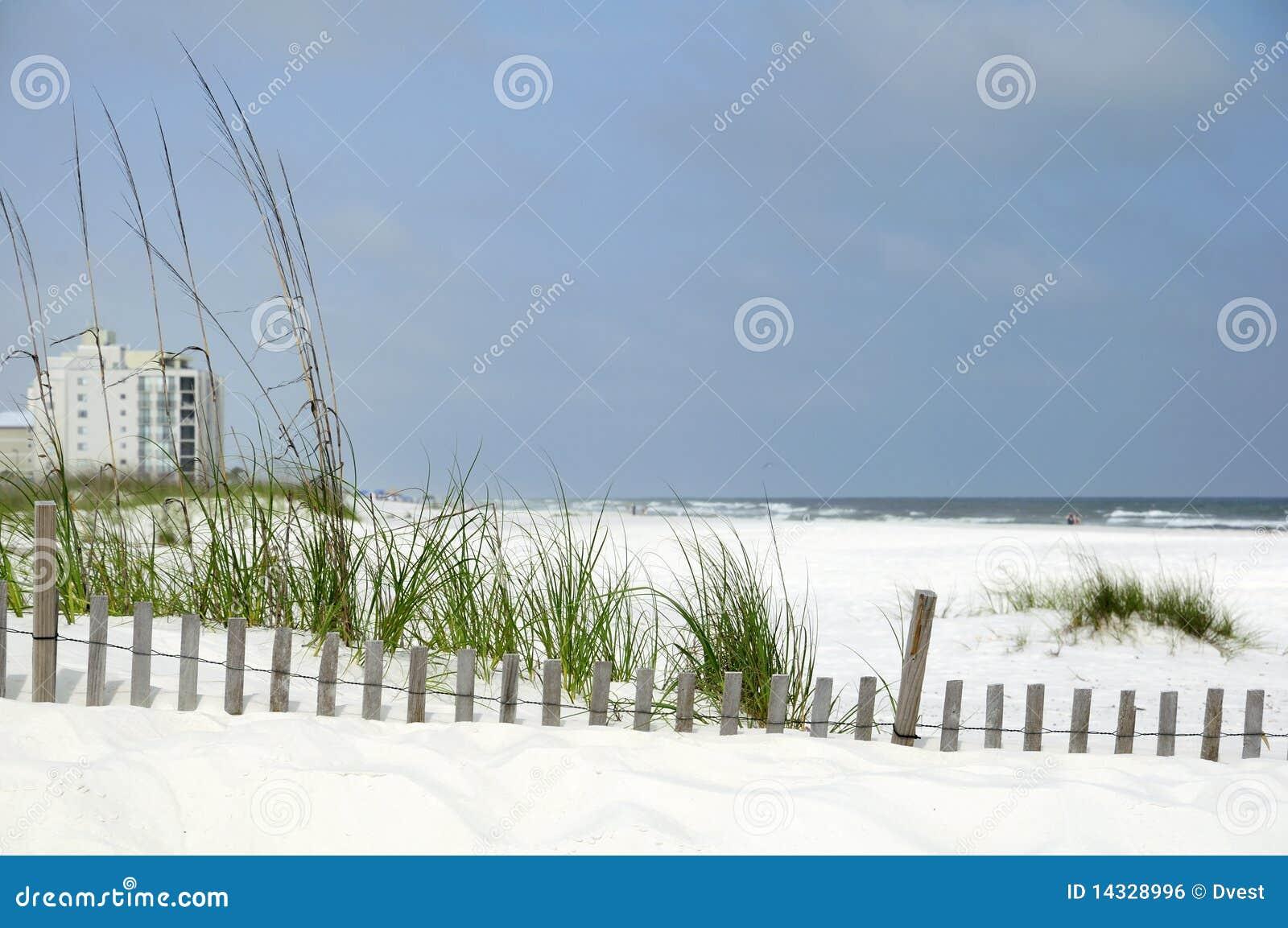 online here arrives cheap sale Costa del golfo de Alabama foto de archivo. Imagen de avena ...