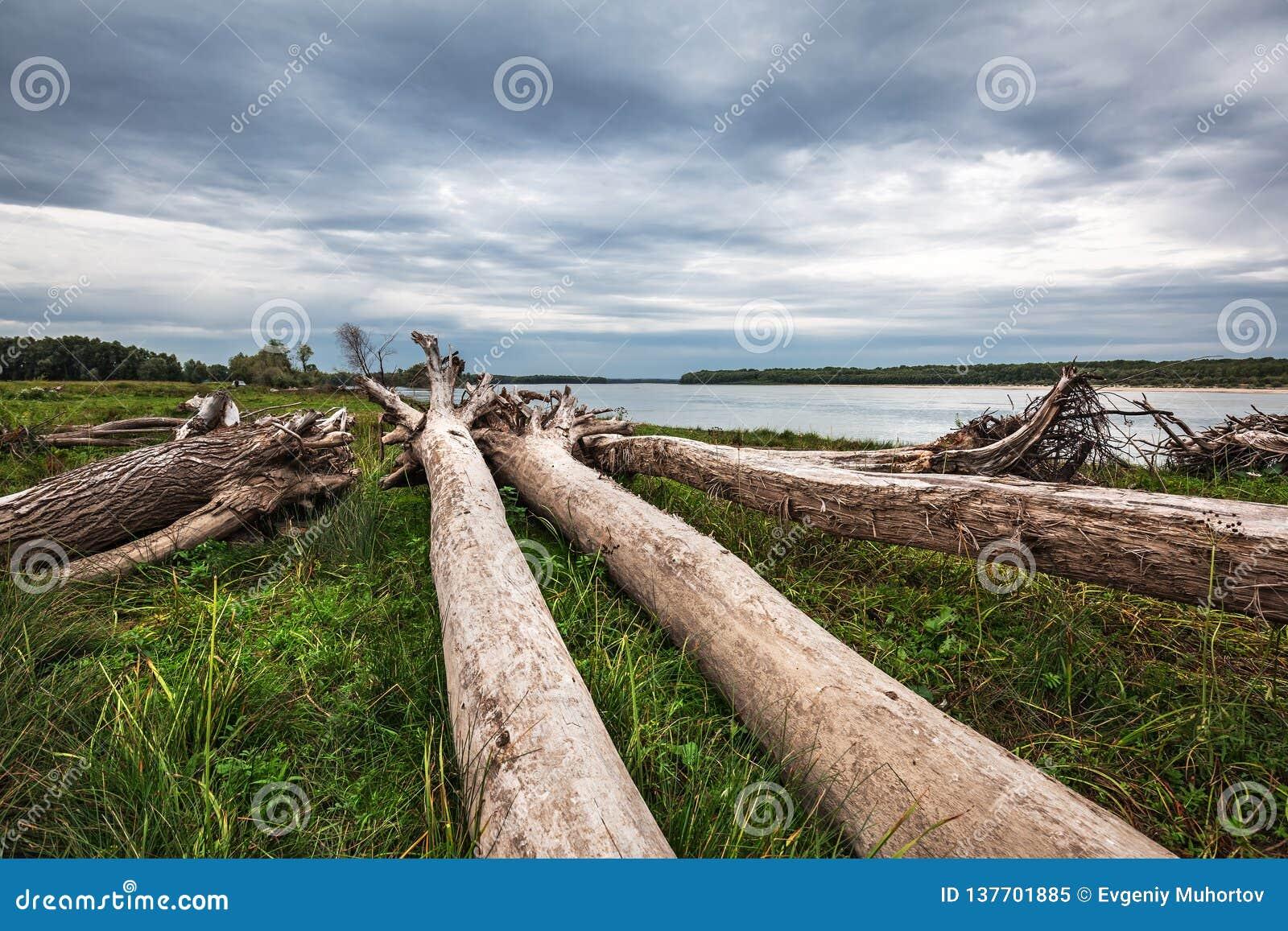 A costa do Rio Ob com senões Sibéria ocidental