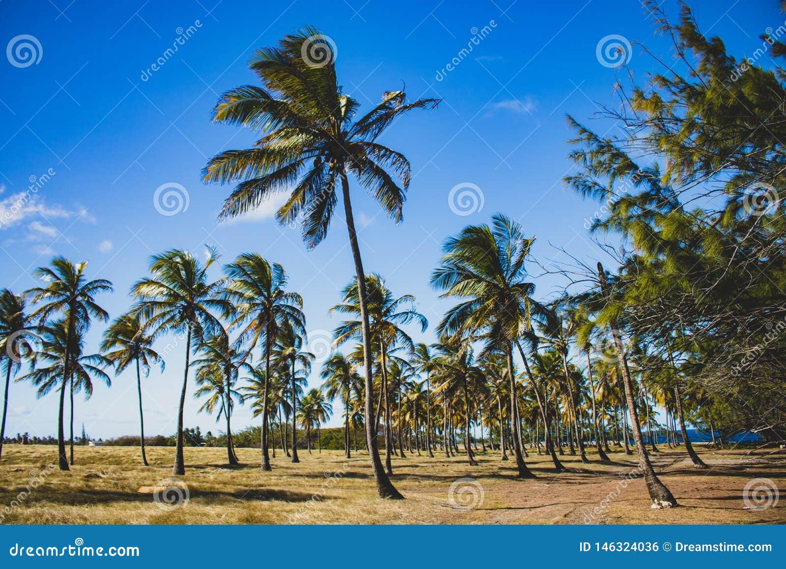 Costa este de Barbados