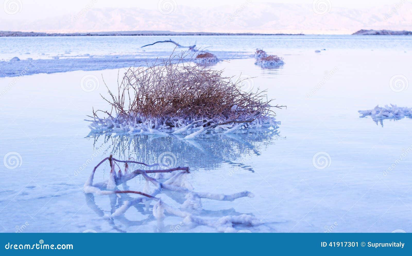 Costa hermosa del mar muerto