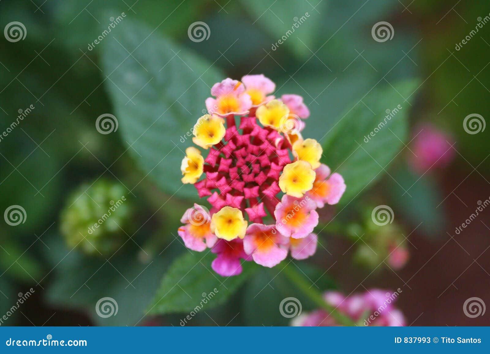 Costa Rica Flower 06