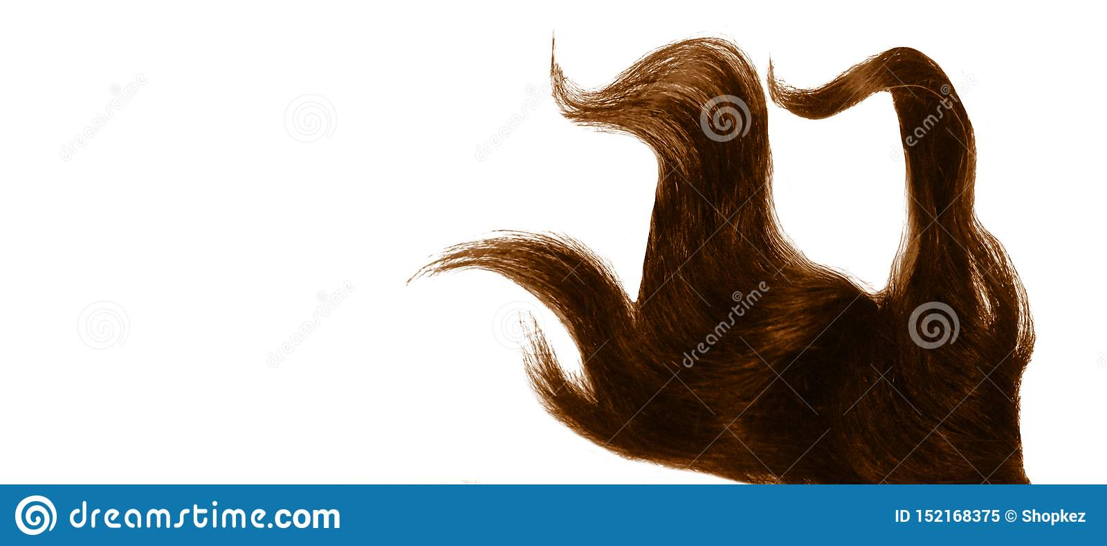 Costa tingida encaracolado do cabelo isolada no fundo branco