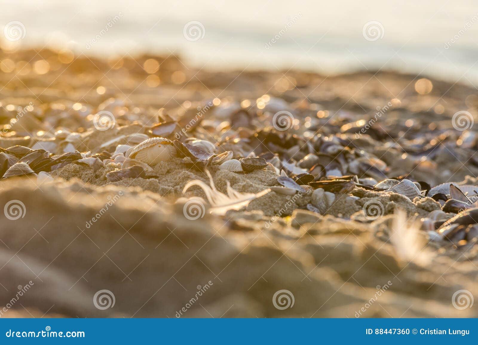 Costas del Mar del Norte
