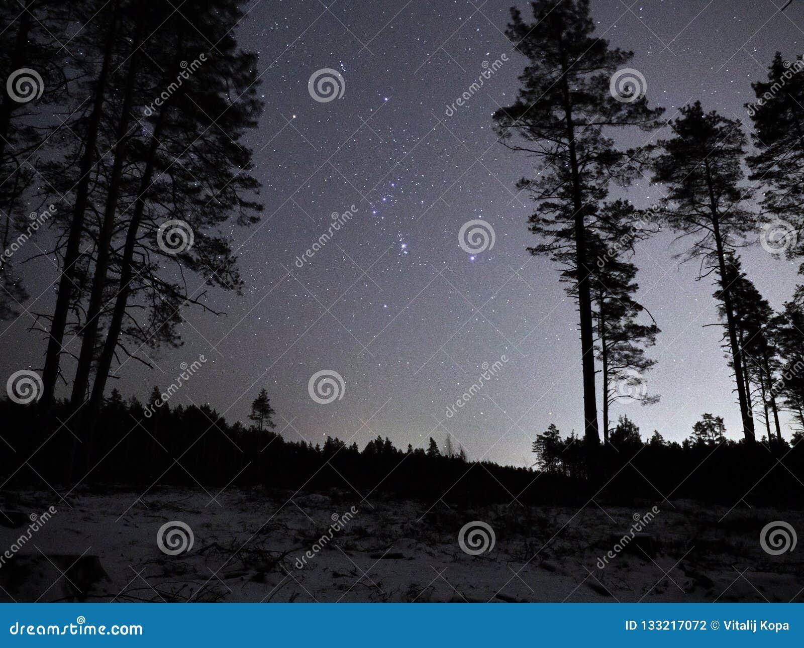 Costellazione di Orione delle stelle del cielo notturno sopra la foresta