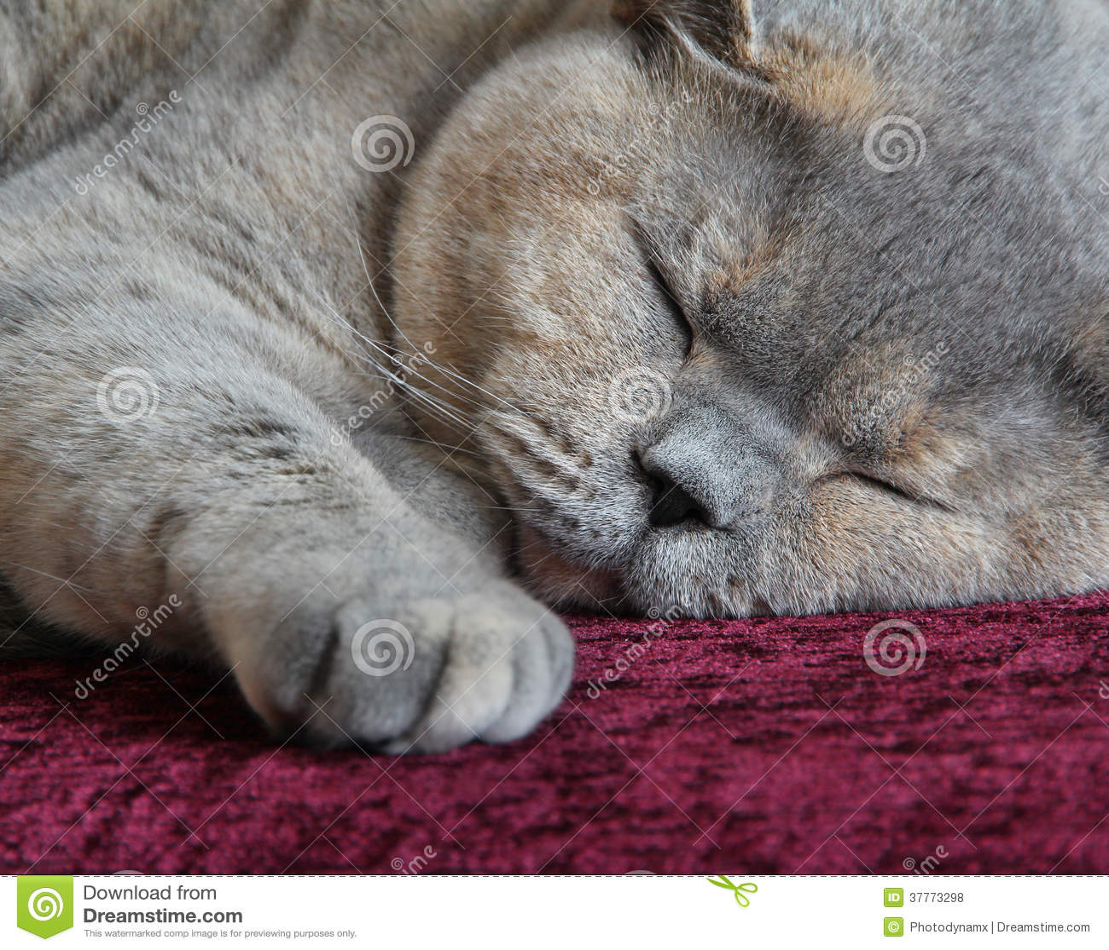 Cosy cat sleeping