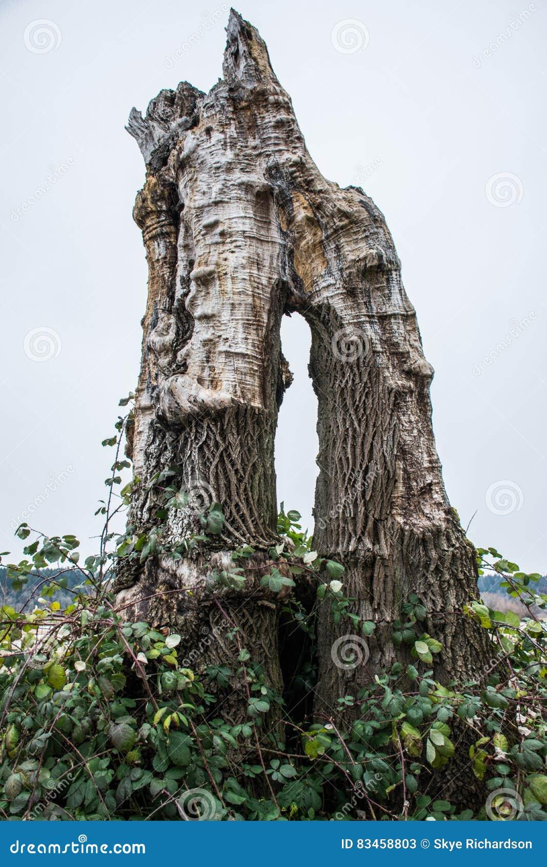 Coto de árvore inoperante