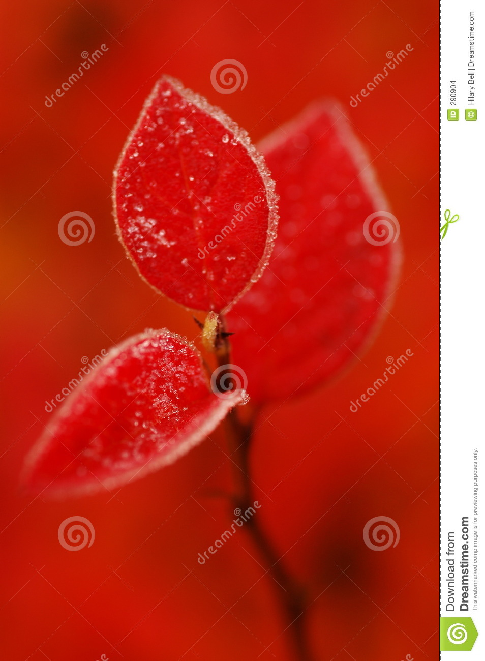 Cotoneasterred