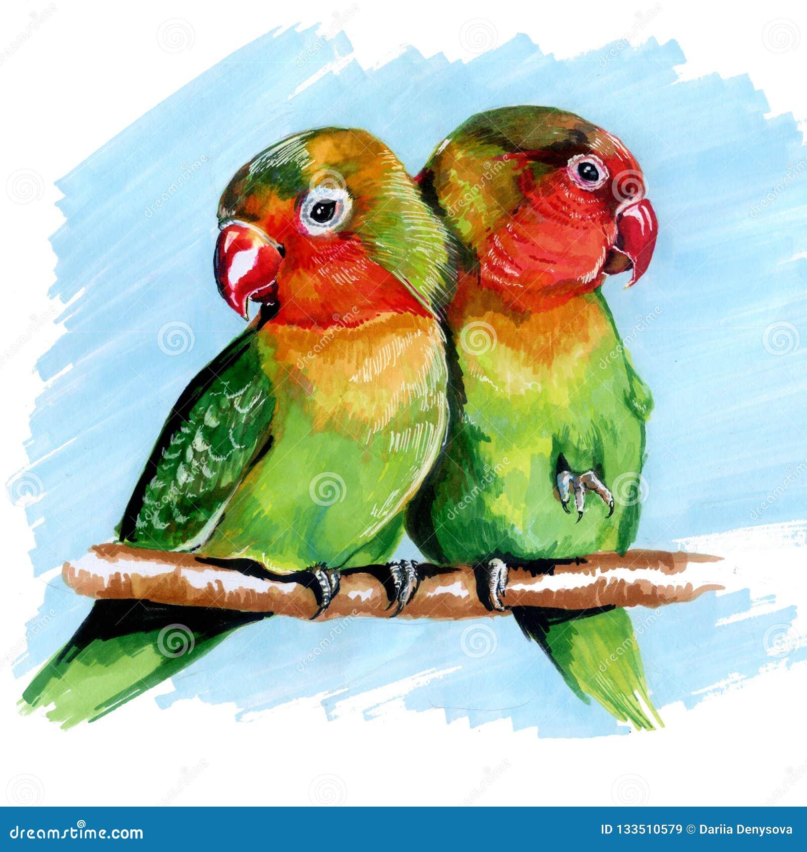 Cotorras rizadas multicoloras de los loros que dibujan a los marcadores