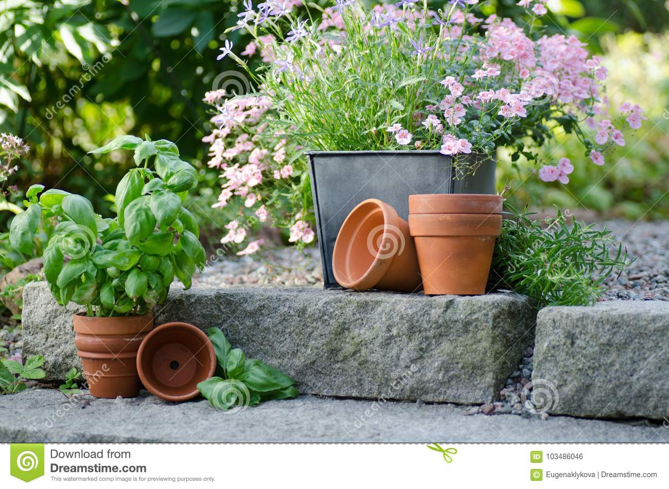 Cottage Garden Beautiful Flowers In Pots Stock Photo Image Of