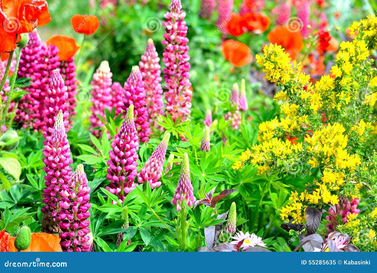 Cottage Garden Flowers Background Stock Photo Image