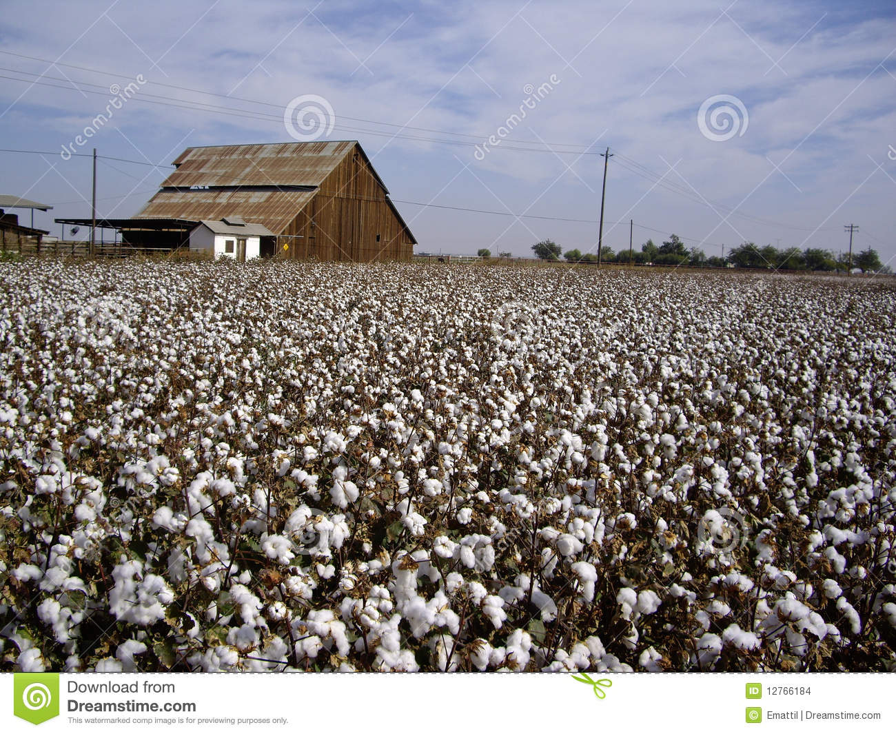 Cotton fields back home stock photo image of horizontal for Back home pictures