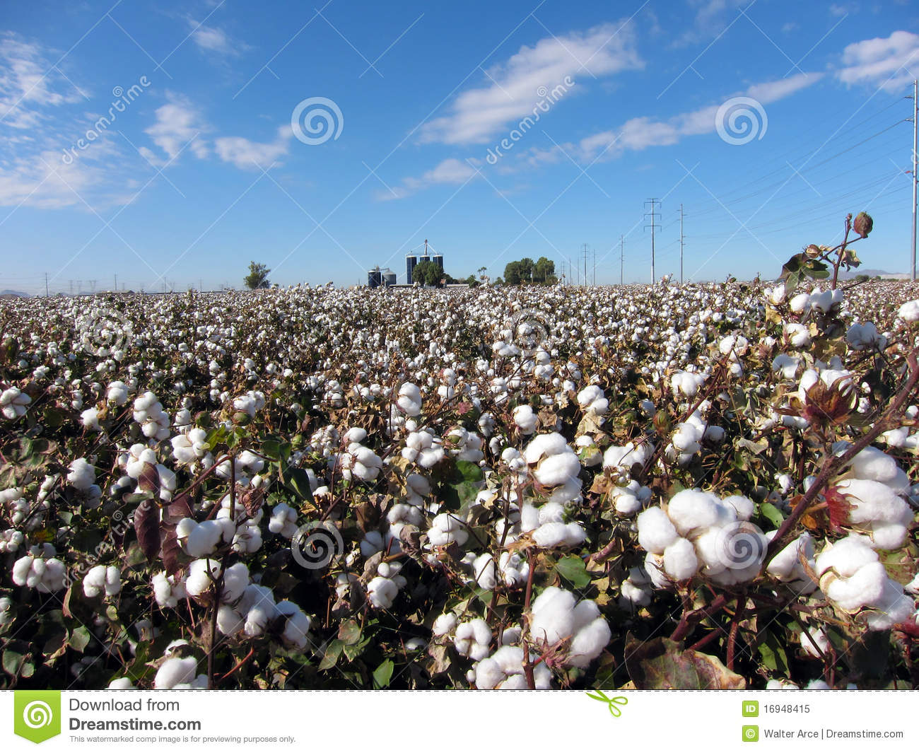 cotton plant jewish personals Enjoy our growing dating site get started  this free jewish internet dating site  is free to join, free to post, free to send and receive emails the site is.