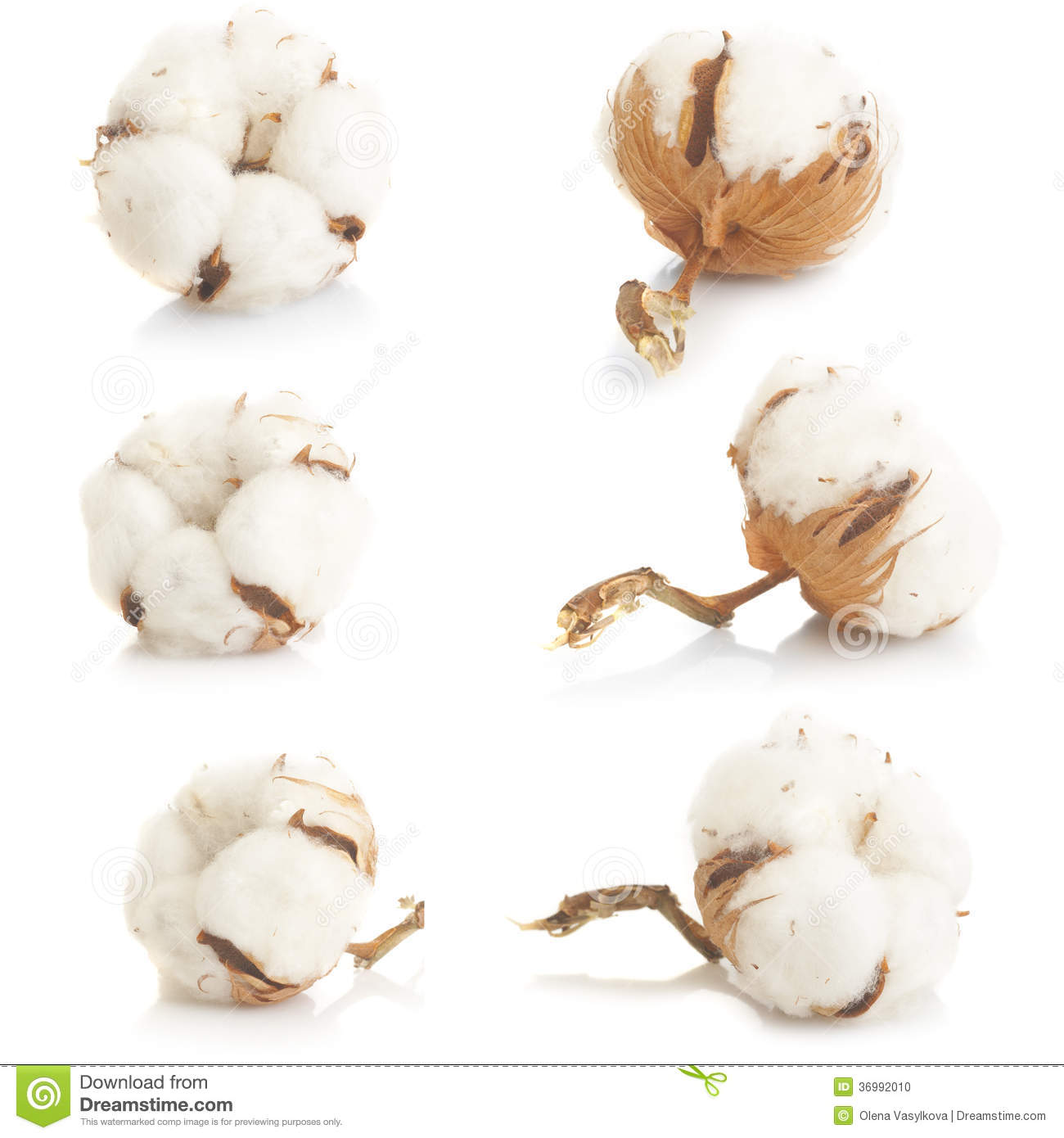 cotton plant jewish singles Learn about fabrics,  cotton – soft vegetable fiber obtained from the seed pod of the cotton plant and one of the major fashion fibers in the textile industry.
