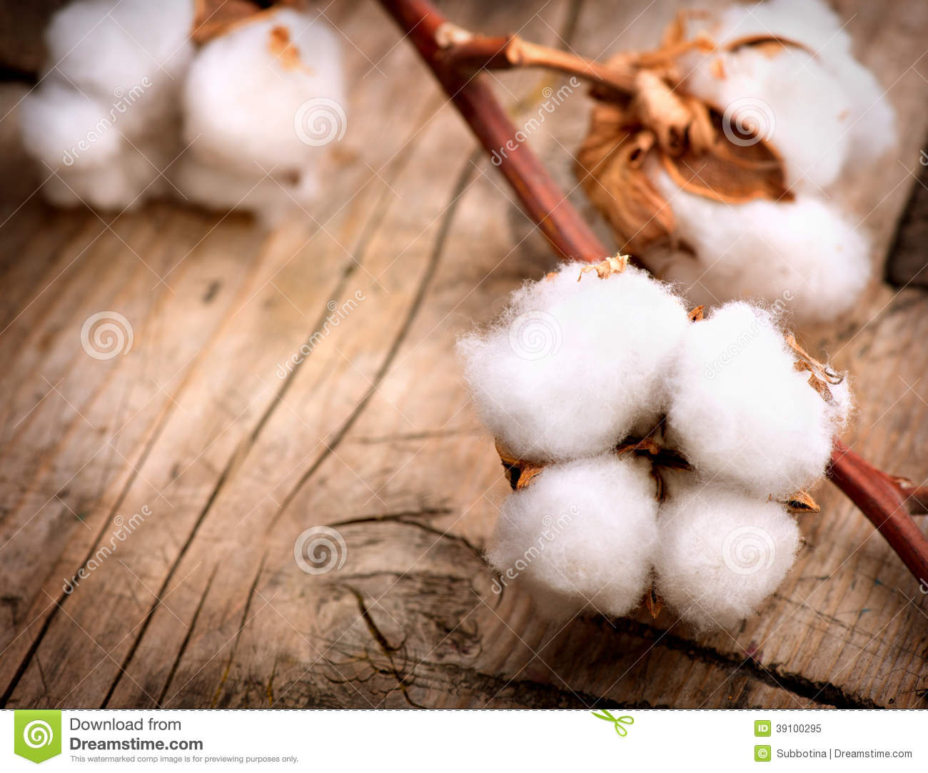 Cotton Plant Buds Over Wood Stock Photo - Image: 39100295