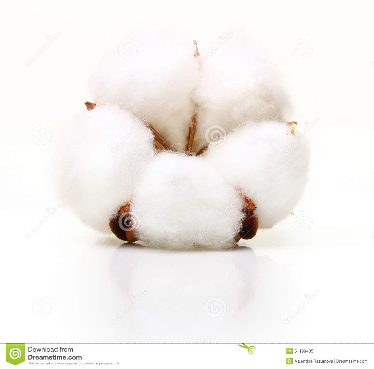 cotton plant singles over 50 Planet earth singles: dating for green singles, vegan singles, vegetarian singles meet your eco-conscious match here best dating site.