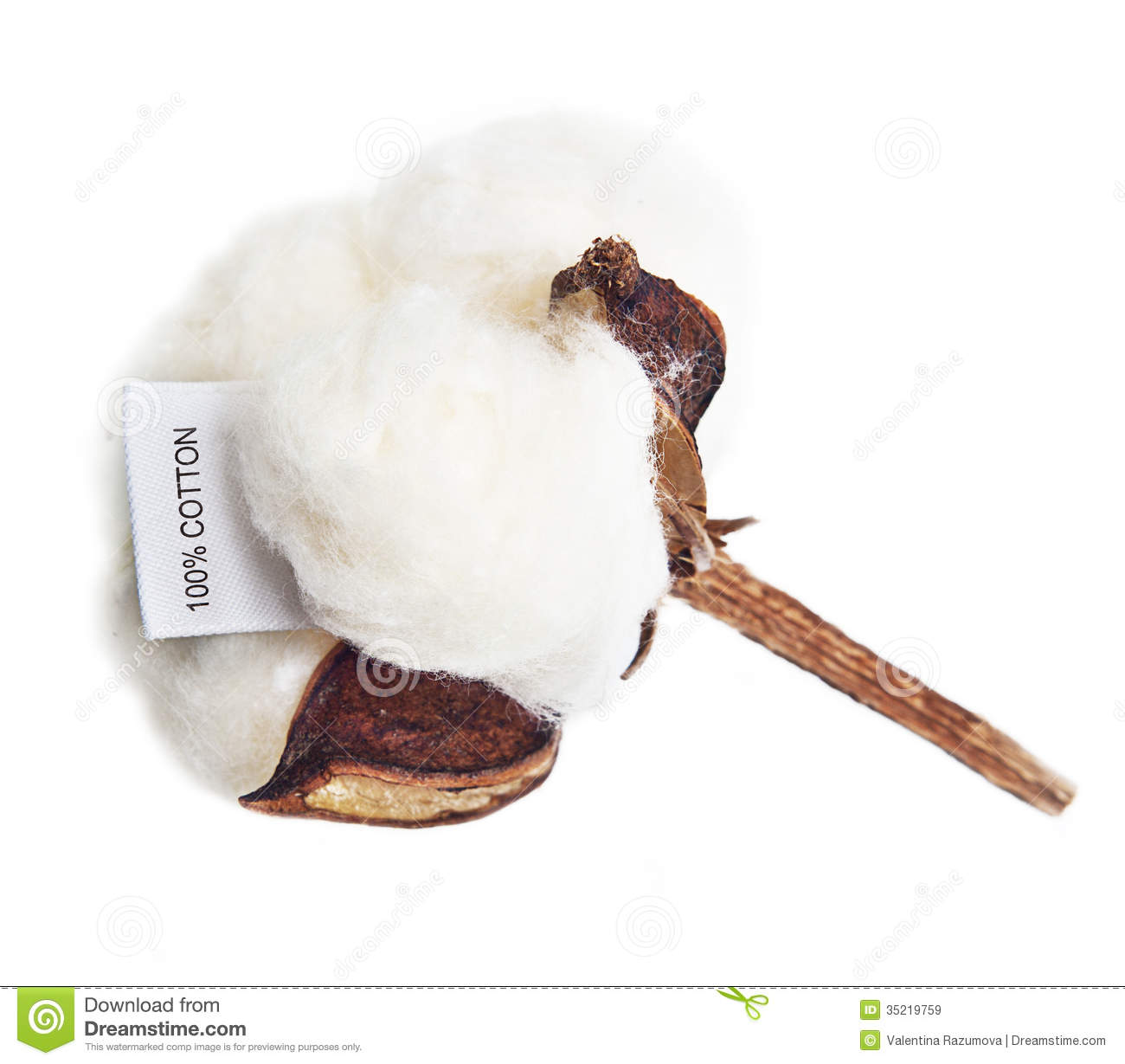 cotton plant catholic single men Start studying history chapter 9 learn vocabulary c were an equal mix of men and women the textile plant established in waltham.