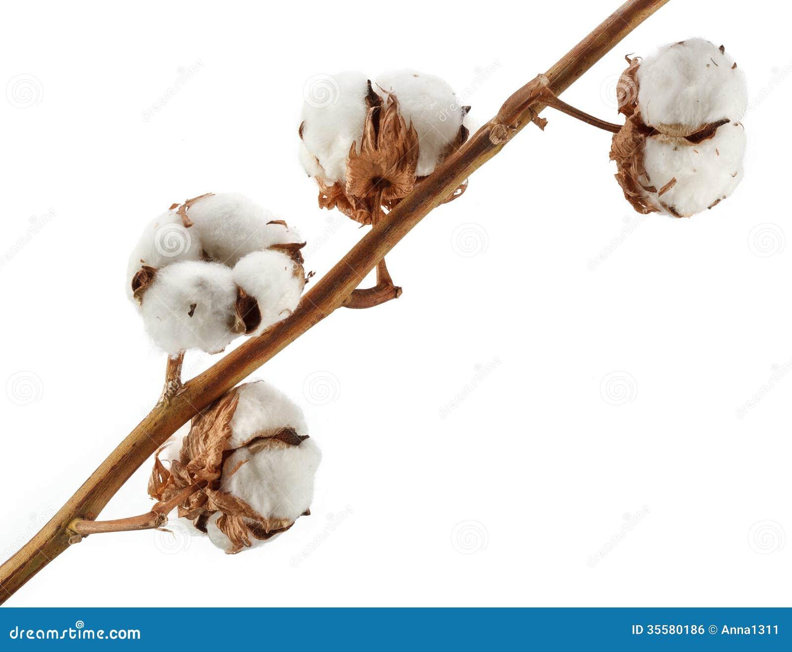 Business plan cotton production 1820