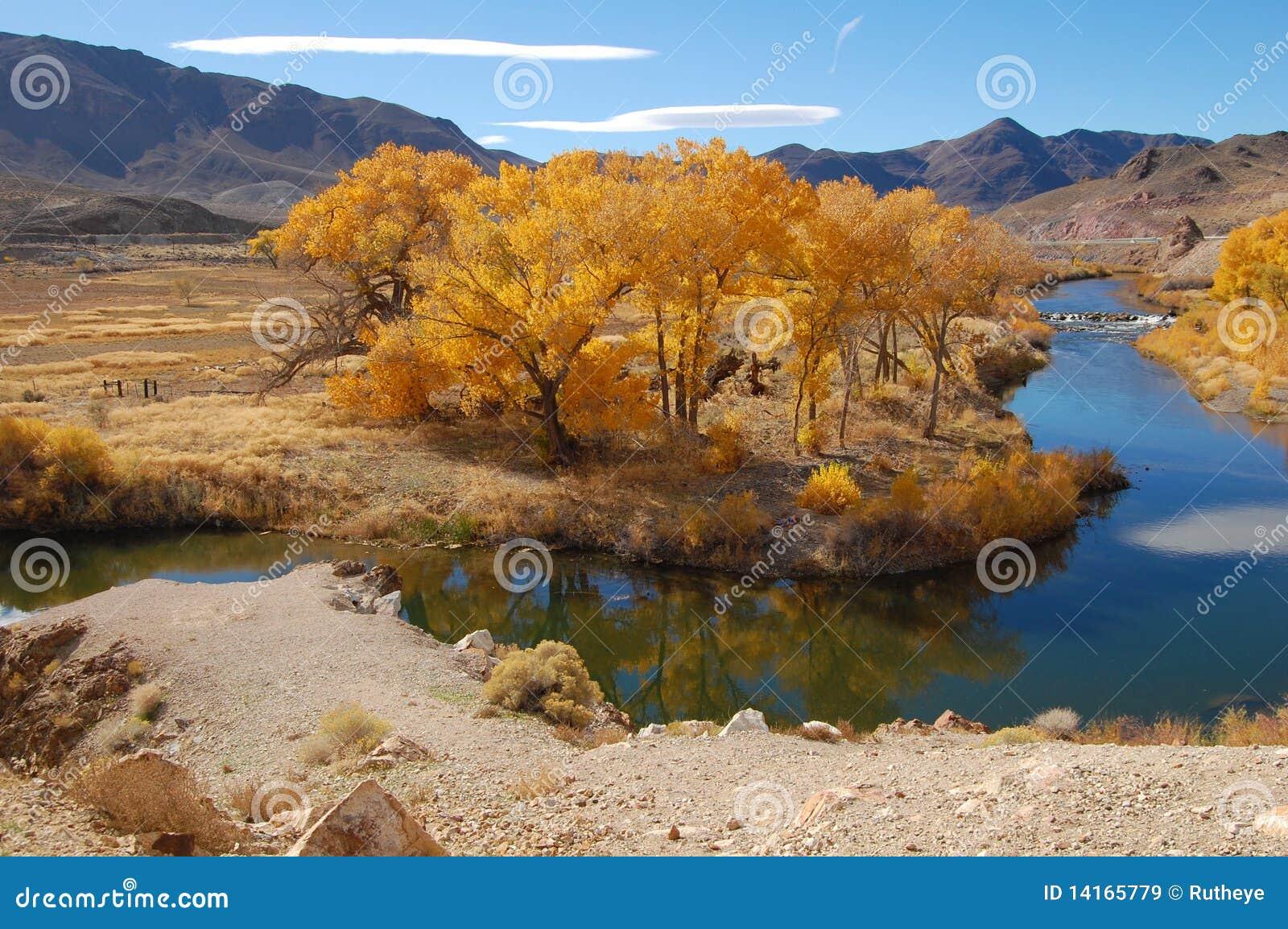 Cottonwoods in Nevada