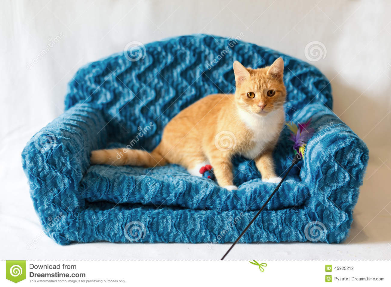 Couch Kitty Stock Photo Image 45925212
