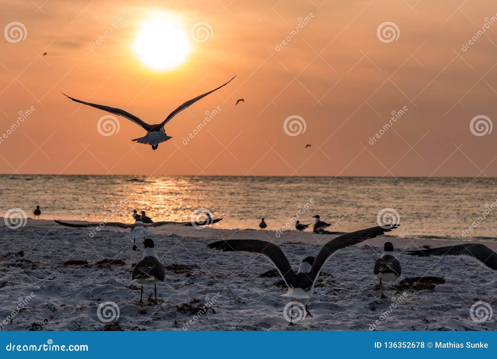 Coucher du soleil ambiant en Floride