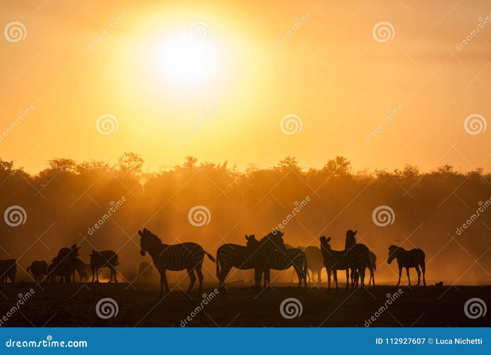 Coucher du soleil au parc national de kruger avec le silo de zèbres, Afrique du Sud