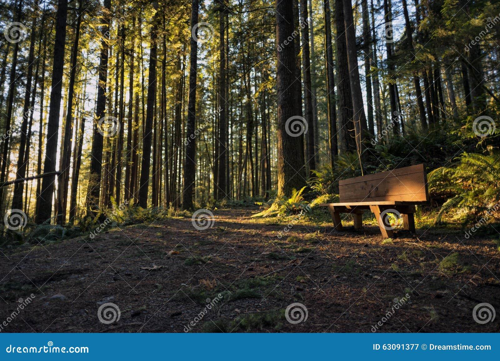 Download Coucher Du Soleil Chez Wallace Falls State Park Image stock - Image du frais, état: 63091377