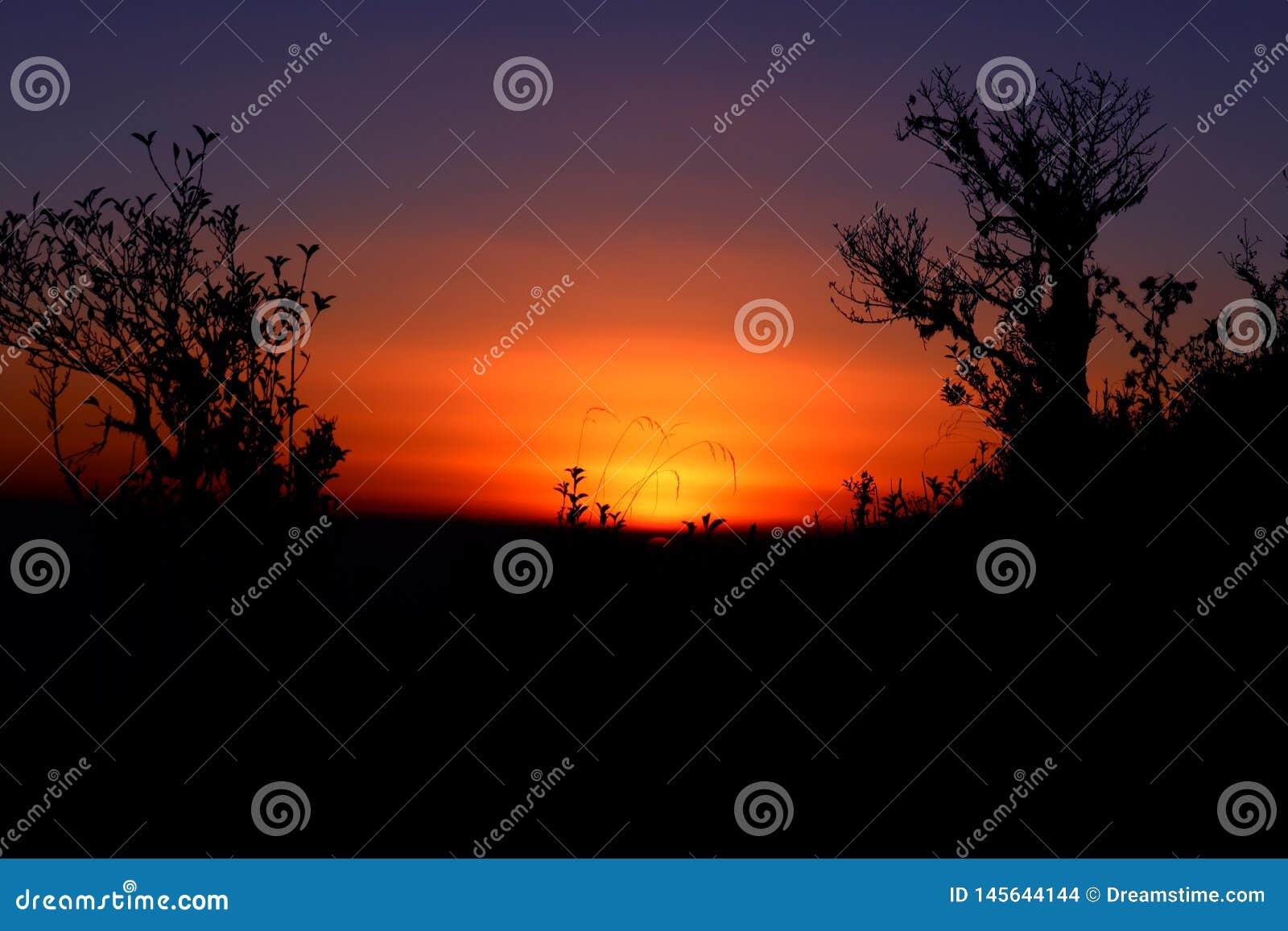 Coucher du soleil coloré avec la silhouette des rhododendrons