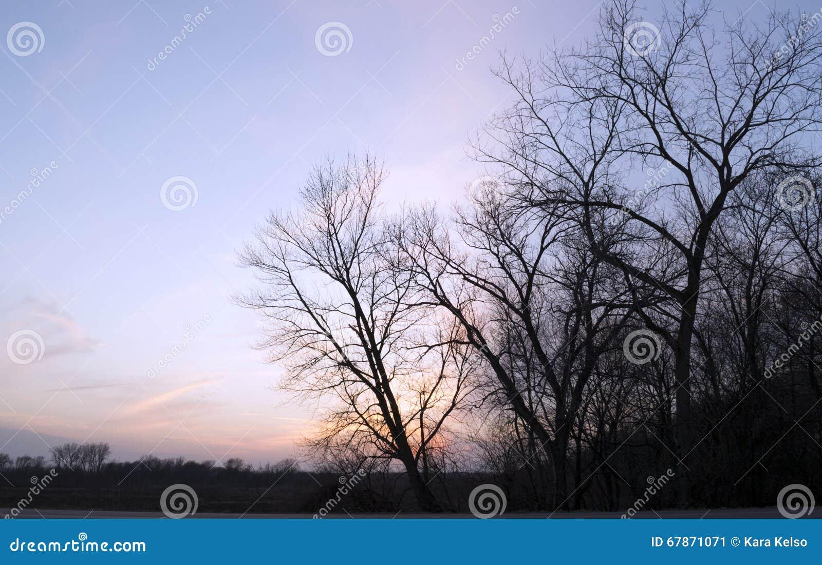 Coucher du soleil coloré et arbres
