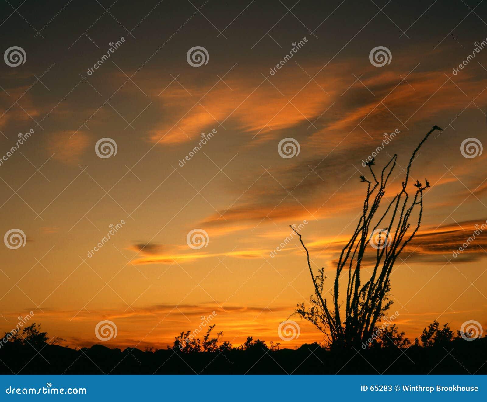 Download Coucher Du Soleil D'Ocatillo Image stock - Image du désert, orange: 65283