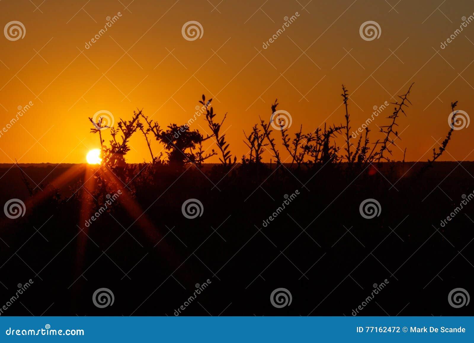 Coucher du soleil dans Addo avec des branches d orange - Addo Landscape